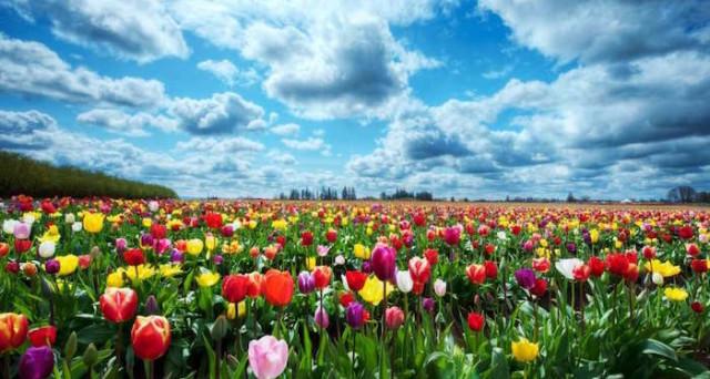 equinozio-primavera--640x342